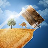 A Camel And A Palm Tree In A Bottle Of Sand. The Desert In The Bottle. A Camel With A Desert. Bottle poster