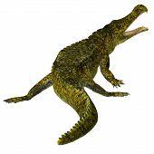 Sarcosuchus Reptile Tail 3d Illustration - Sarcosuchus Was A Carnivorous Aquatic Crocodile That Live poster
