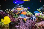 Marine Plants And Animals In An Marine Aquarium. Reef And Tropical Fishes. poster