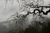 Misty Mountain Weather