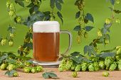 image of bine  - still life with hop cones and beer glass - JPG