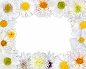 Flower Frame With White Flowers On Blank Background