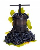 stock photo of wine-press  - Traditional manual grape pressing utensil in a blue grape bunch - JPG