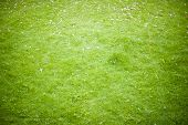 Backgrounds Of Grass