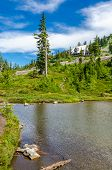 Beautiful Mountain River at the Bagley Lake Trail Park. Mount Baker, Washington, USA.