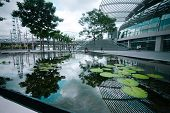 Singapore - February 26: Trees And Pond With Lotus Flowers Near Museum Of Fine Arts On Business Dist