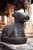 picture of trichy  - Statue of Nandi Bull at Brihadishvara Temple - JPG