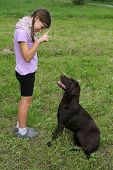 Girl Trains A Dog On A Meadow