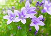 stock photo of wildflowers  - Beautiful spring background with campanula bouquet - JPG