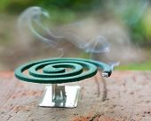 stock photo of coil  - Burning mosquito coil is an anti - JPG