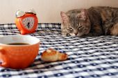 Morning - Alarm Clock, Cup Of Coffee And Drowsiness Cat