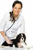 Young positive brunette veterinary woman holding spaniel with wounded leg