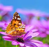 pic of summer insects  - Closeup photo of beautiful butterfly with gorgeous colorful wings sitting on purple flower - JPG