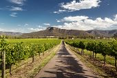 stock photo of hunter  - View of Hunter Valley vineyards - JPG