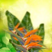strelitzia flowers  on bokeh background