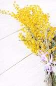picture of mimosa  - Mimosa flowers on a white wooden table