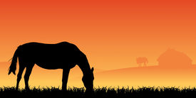 stock photo of workhorses  - two horses on pasture at sunset in summer illustration - JPG