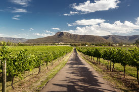 pic of hunter  - View of Hunter Valley vineyards - JPG
