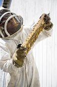 Beekeeper Inspecting Hive Frame