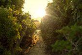 Green Bush Tree With Sun Light Macro