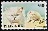 PHILIPPINES - CIRCA 1979: A stamp printed in Philippines shows Chinchilla cat circa 1979