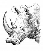 artwork rhinoceros, sketch black and white drawing