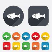 Fish sign icon. Fishing symbol.
