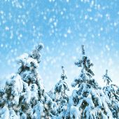 Winter landscape with fir trees covered by snow.