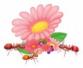 Illustration of the fresh flowers with ants on a white background
