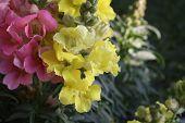 flower in the amazonas