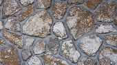 Wall Stones With Mollusc Tracks
