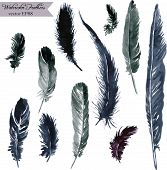 pic of feathers  - set of plumes - JPG