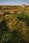 Ushant island meadow landscape at the Pern point, Brittany, France