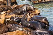 Sea lions on the piers in San Francisco