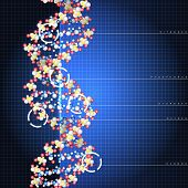 Dna double helix molecules and chromosomes