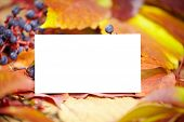 Blank place card amongst autumn leaves