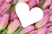 Tulips Flowers With Heart As Symbol Of Love On Mothers Or Valentine's Day