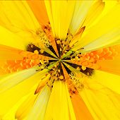 Yellow Flower Center Collage Geometric Pattern
