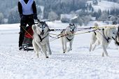 stock photo of sled  - Group of sled dogs running through lonely winter landscape - JPG