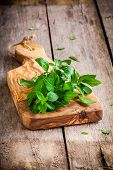 Bunch Of Fresh Organic Basil In Olive Cutting Board