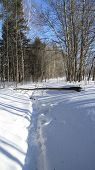 stock photo of hollow log  - Snow path and fallen log of tree - JPG