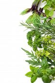 Fresh green herbs isolated over white background