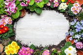 Frame of spring flower and gardening tools on old wooden background