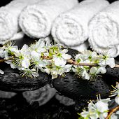 Blooming Twig Of Plum, White Towels On Zen Stones With Reflection Water, Spa Background, Closeup