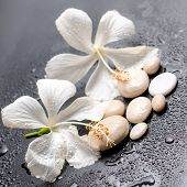 Beautiful Spa Still Life Of Delicate White Hibiscus And Stones On Black Background With Drops, Close