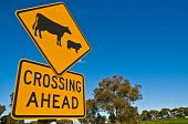 Sheep & Cattle Crossing Warning Sign in the Australian Bush