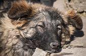 Street mongrel dog closeup