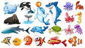 Illustration of different kind of sea animals