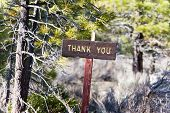 pic of thank you  - thank you sign in the woods