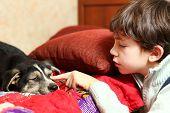 picture of preteen  - preteen handsome boy and  his shepherd puppy - JPG